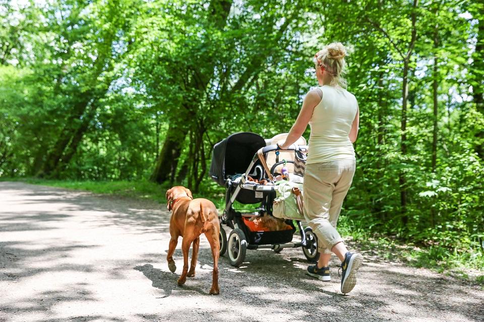 mit Hund und Kind im Wald