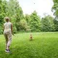 mit dem Hund im Wald