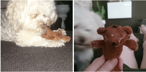 8-hund-mit-kuscheltier