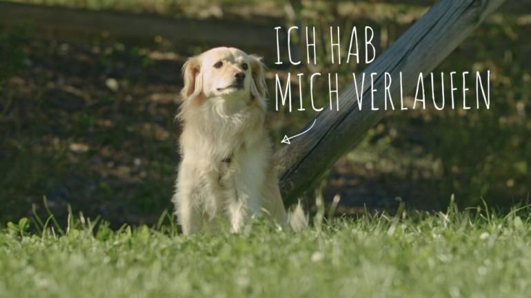 Bringt mir meinen Hund zurück!
