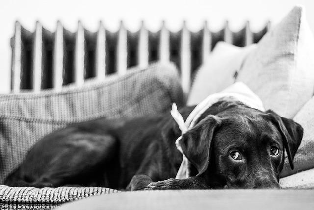 Auf den Hund gekommen – Die notwendige Grundausstattung