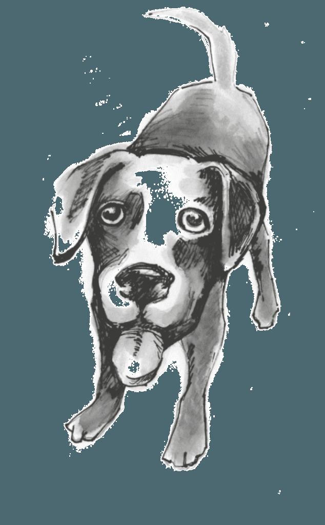 hund zeichnung