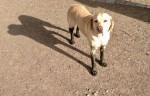 Hund mit Schlammpfoten