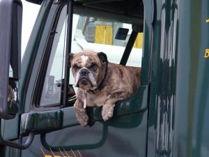 Transport, Hund-Hundebox