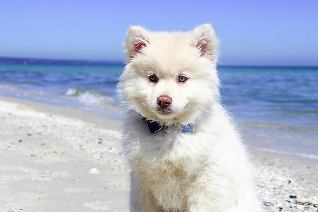 Sommerferien mit dem Hund