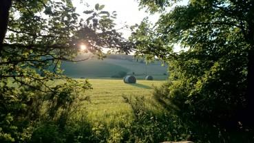 Mit dem Hund die Einsamkeit der Wälder im Prümer Land erkunden