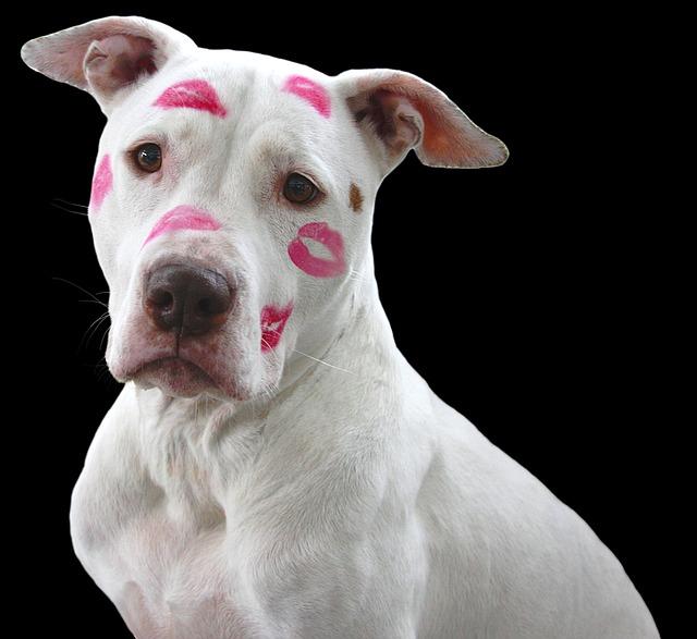 Listenhunde und Hundehaftpflichtversicherung