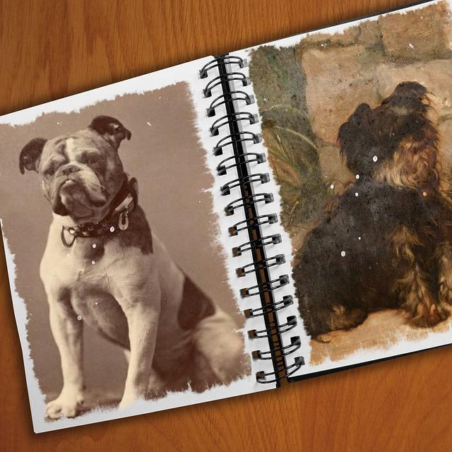 Hundefotografie: Den Lieblingsvierbeiner ins richtige Licht rücken