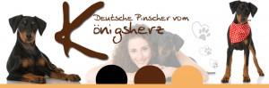Deutscher- Pinscher-Banner