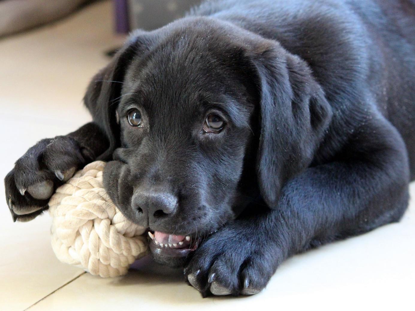 hunde richtig transportieren issn 39 r de hunde news. Black Bedroom Furniture Sets. Home Design Ideas