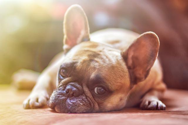 So stark variieren die Kosten für den Hund in Deutschland
