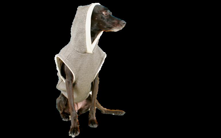 Wie schütze ich meinen Hund vor der Kälte? – 10% Gutschein-Aktion!