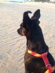 Hund am Strand schaut aufs Meer