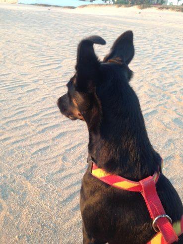 Gecka – der schnellste Hund von Mexiko