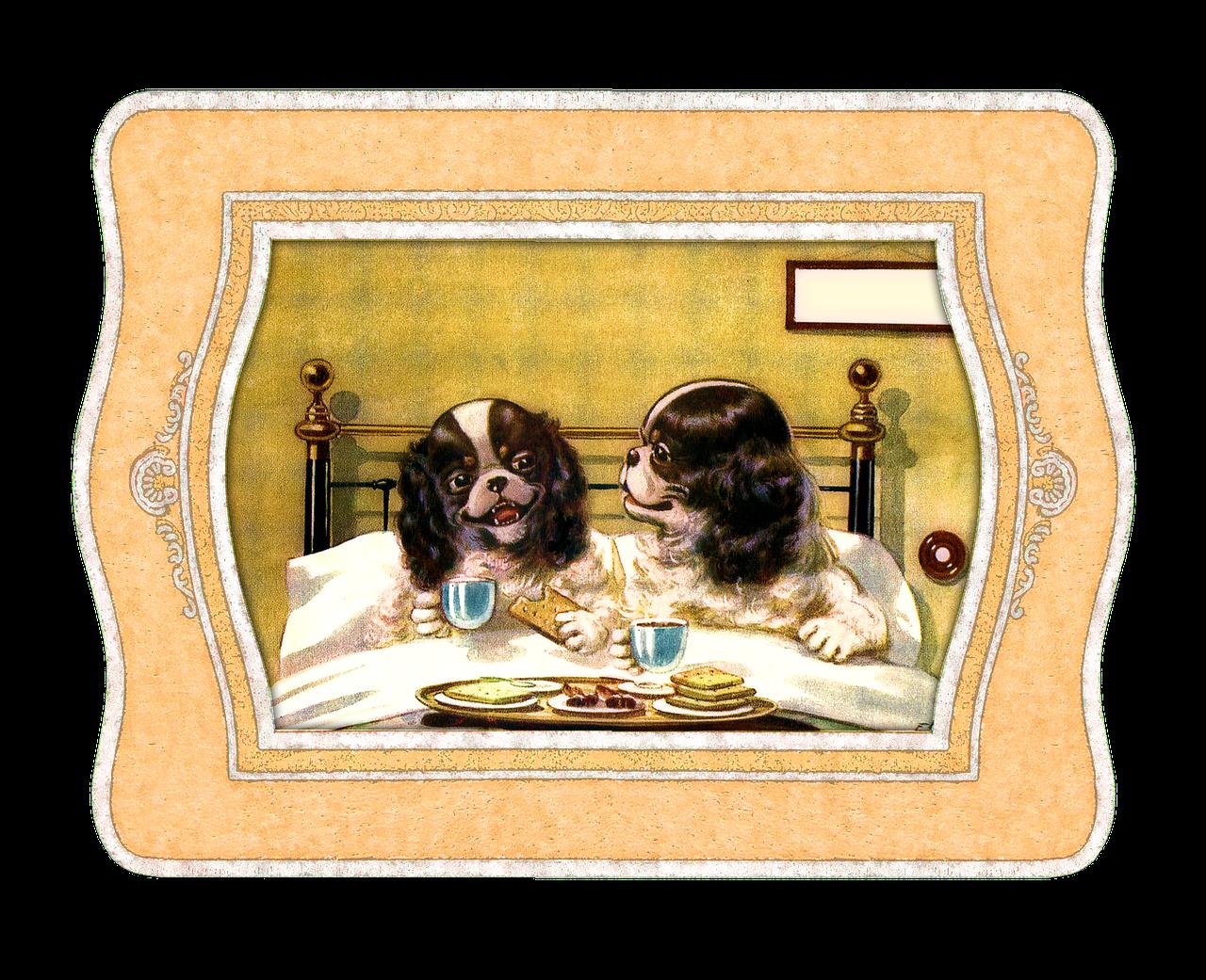 Das Hundebett – 10 Qualitätsmerkmale
