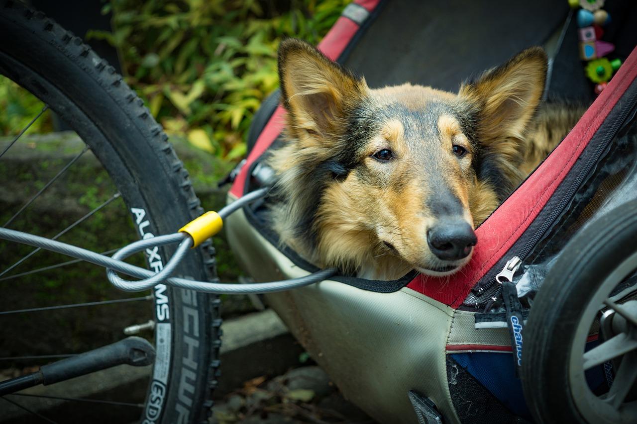 Qualitätskriterien bei Hundefahrradanhängern: 6 Tipps für einen guten Kauf