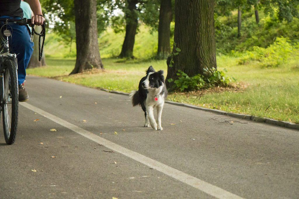 Diesem Hund fehlt nicht die Kondition, er braucht wohl keinen Fahrradanhänger
