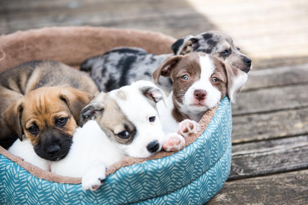 Hundewelpen im Körbchen