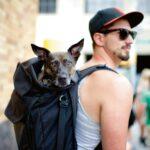 Hund im Rucksack von Hipster