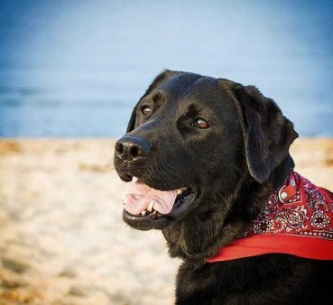 Welche Hundeversicherung du wirklich brauchst