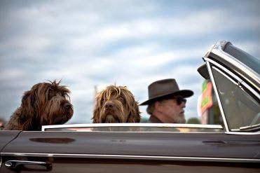 Entspannte Autofahrten mit dem Hund – so geht's!