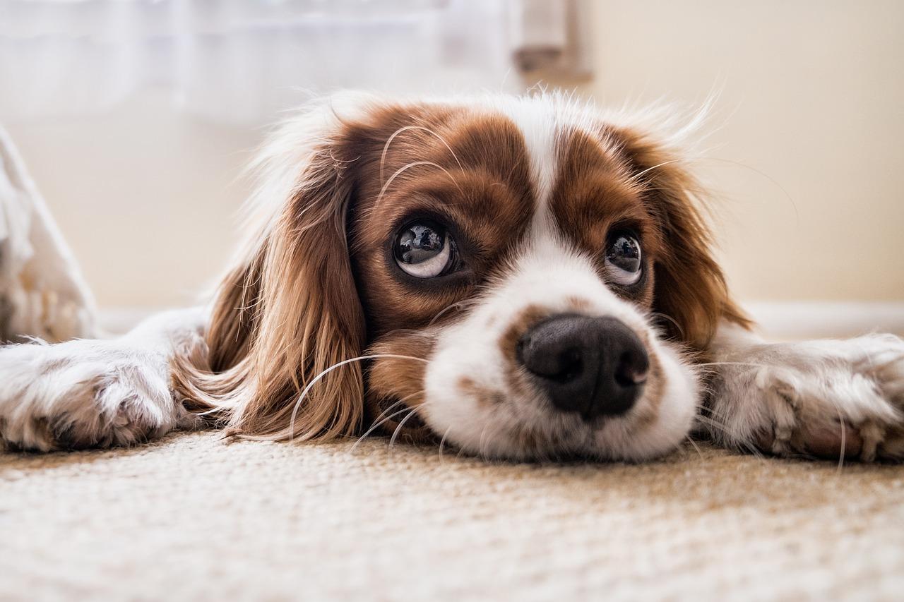 Tiere in der Mietwohnung – Die wichtigsten Gerichtsurteile und Ihre Konsequenzen
