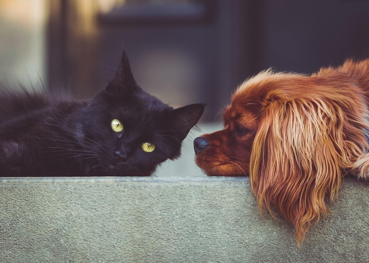 Hund und Katze beschnüffeln sich