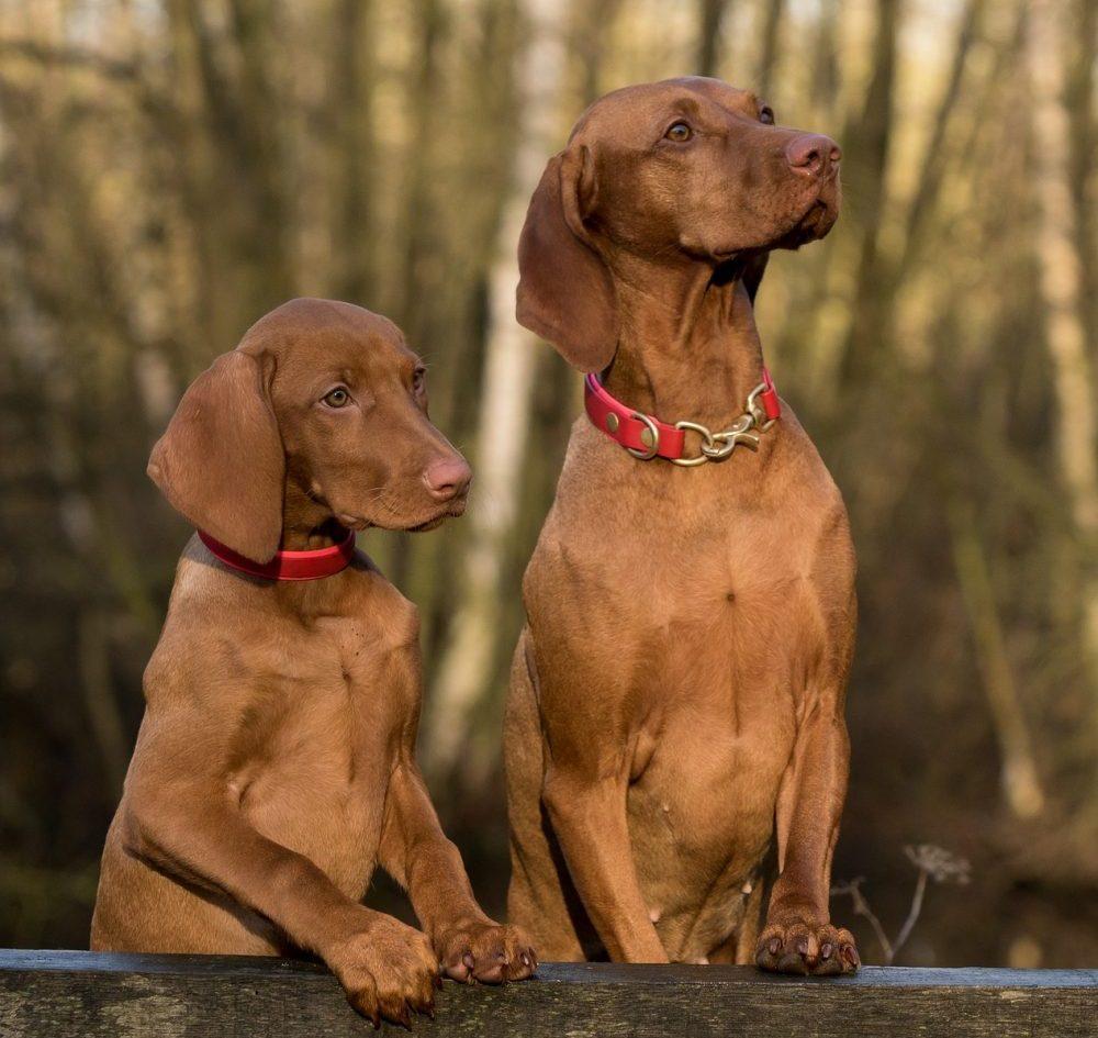 Welcher Hund eignet sich als Familienhund