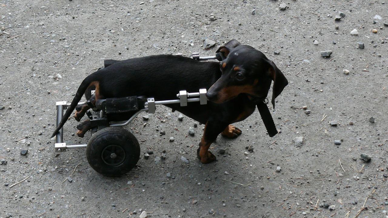 Welche Tierversicherung Sinn machen