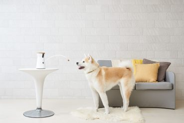 Verlosungsaktion: Furbo – erste interaktive Hundekamera gibt es hier zu gewinnen!