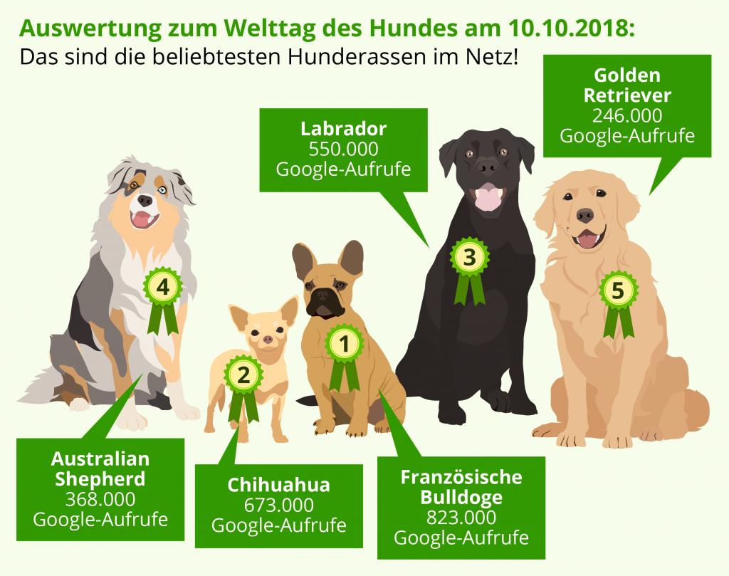 beliebteste-hunderassen laut google