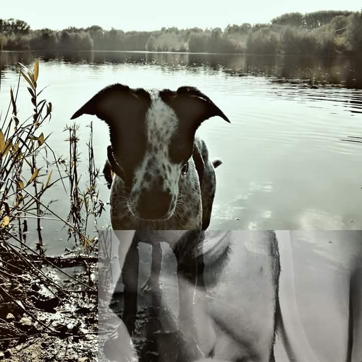 brief von tierschutzhund