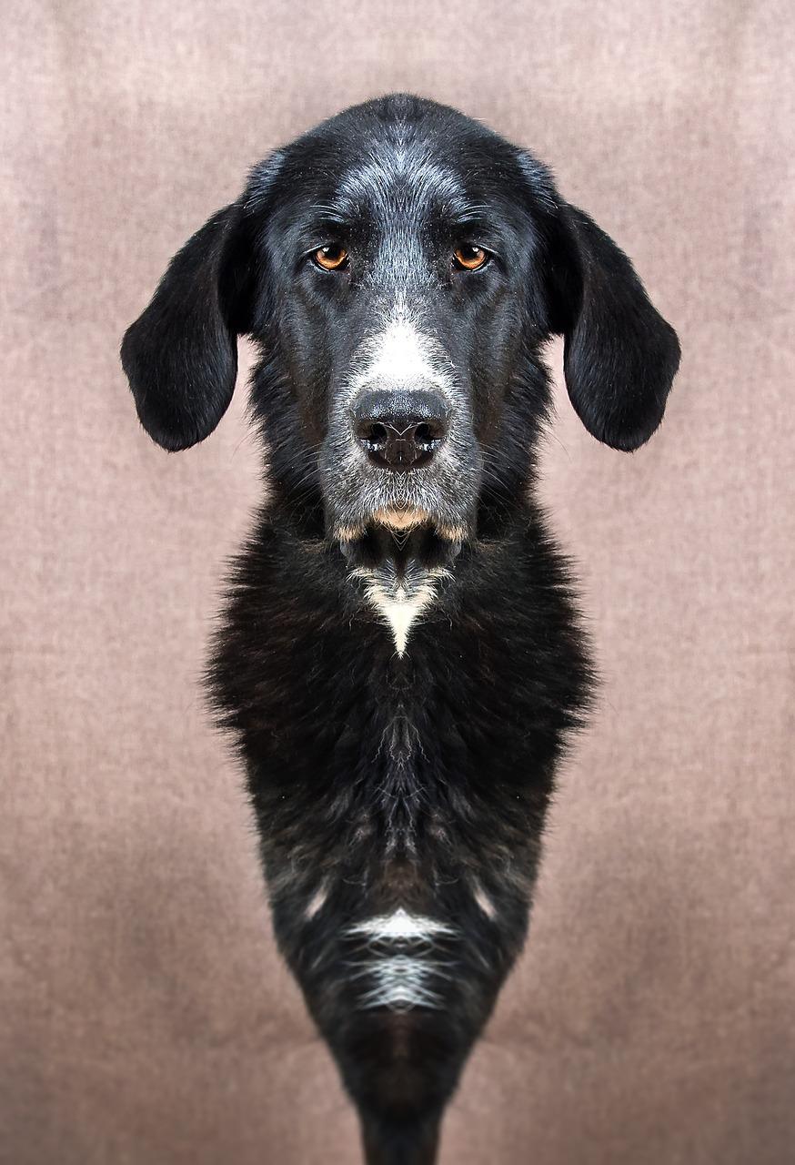 Spieglein, Spieglein an der Wand, wer ist die beliebteste Hunderasse im ganzen Land?