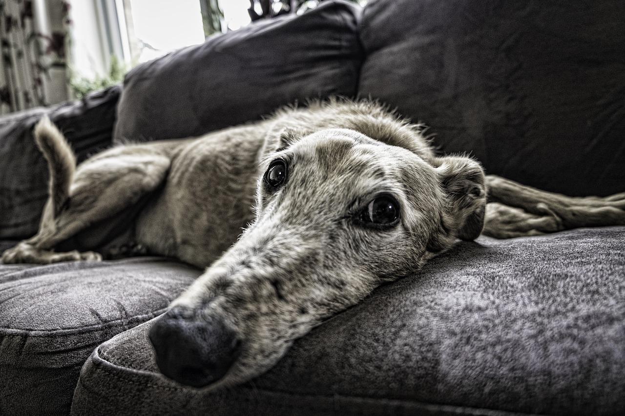 Auf ins neue Revier – So gelingt der Umzug mit dem Haustier