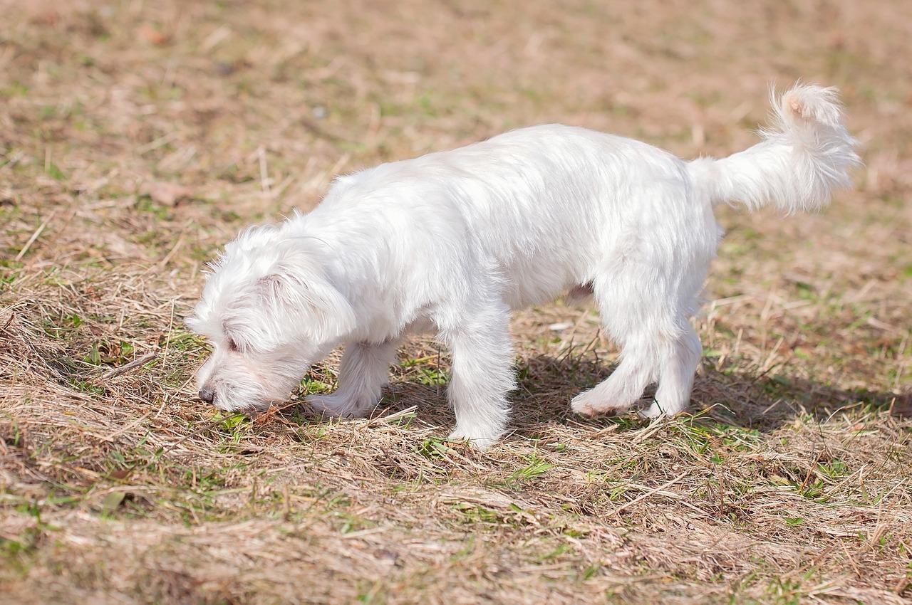5 Gründe, warum dein Hund schnüffelt