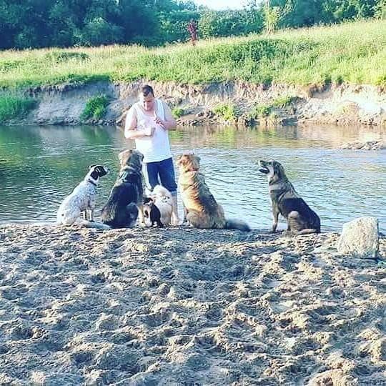 regeln für hunde