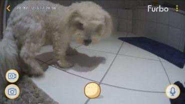 Testbericht – Furbo Hundekamera, oder: was macht Dein Hund eigentlich den ganzen Tag?