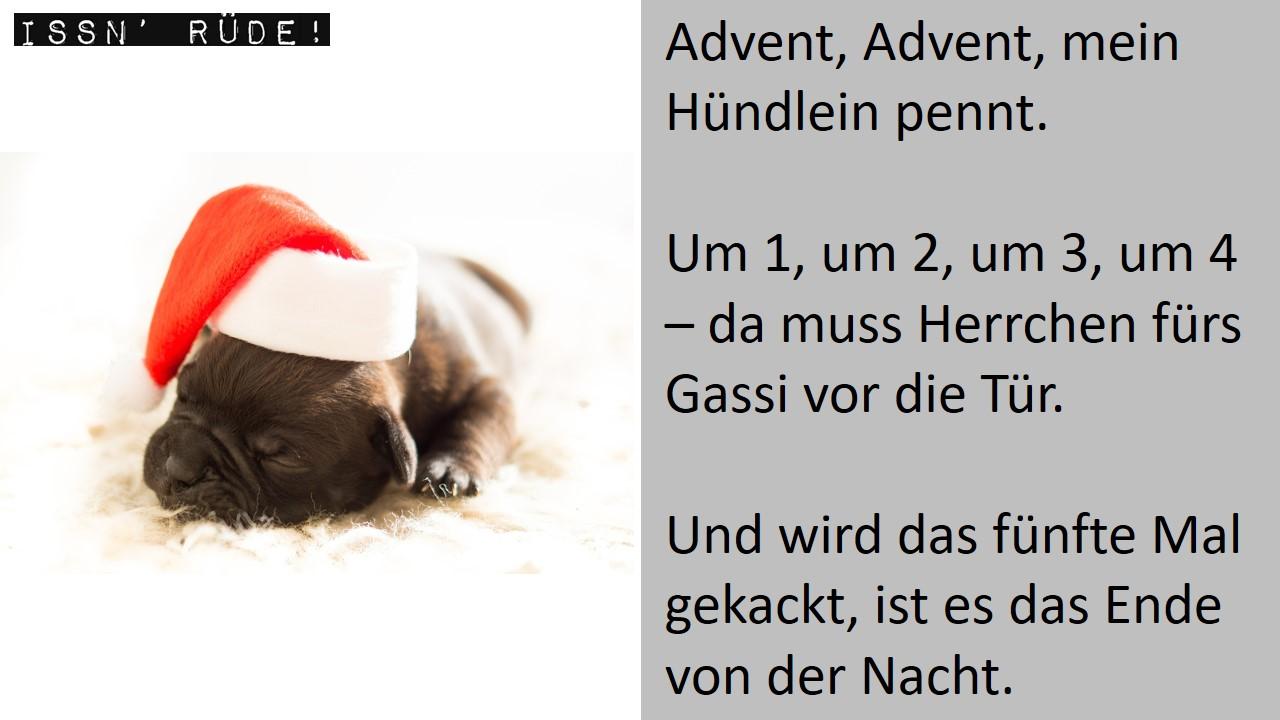 """Advent, Advent – ein Hunde-""""Weihnachtsgedicht"""""""