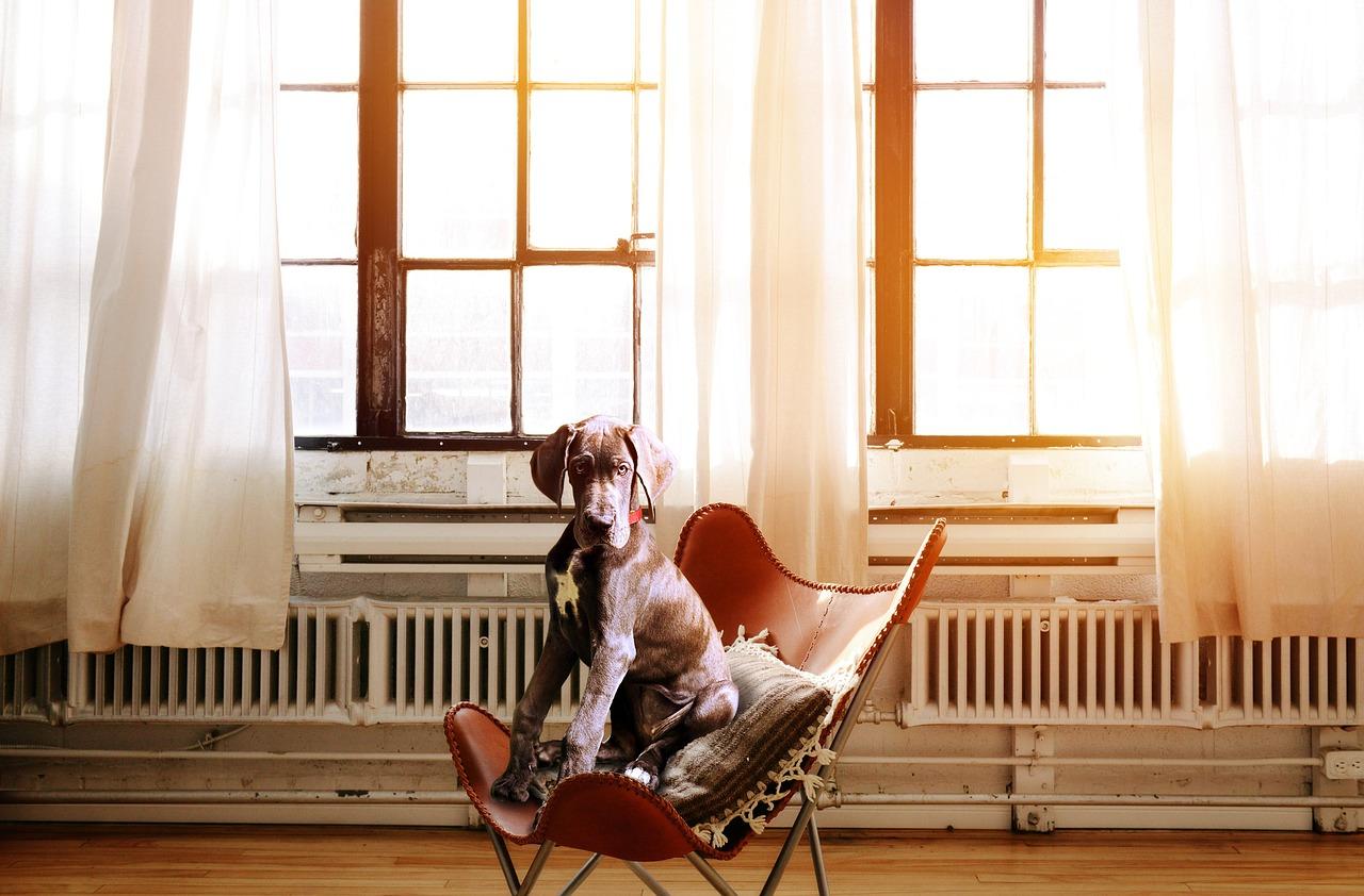 Bürohunde können den Büroalltag erleichtern