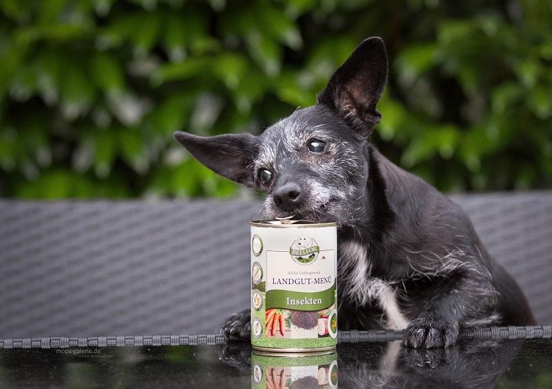 Hund öffnet Insektenprotein Hundefutter Dose