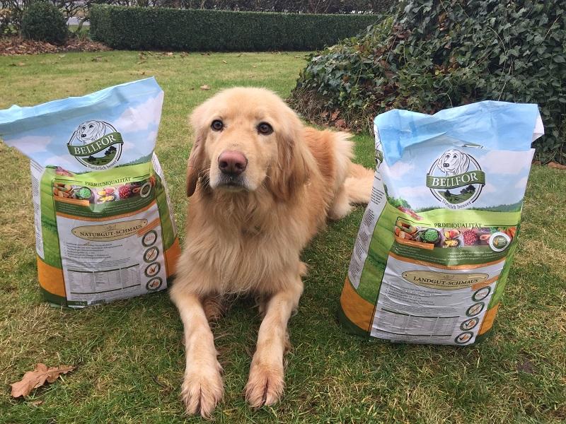 Hund mit Bellfor Produkten