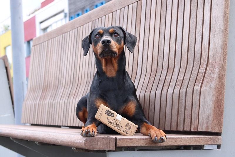 Hund mit PooPick auf der Bank