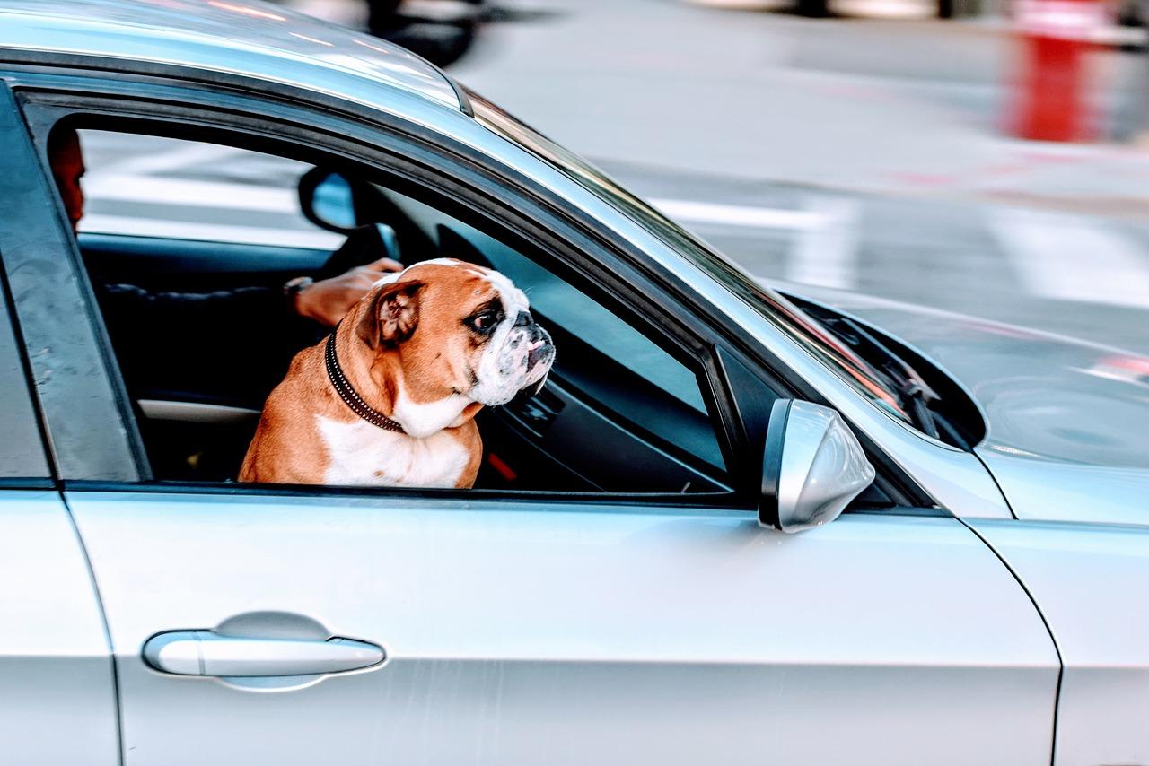 Lange Autofahrten – so werden sie für Hund und Herrchen erträglich