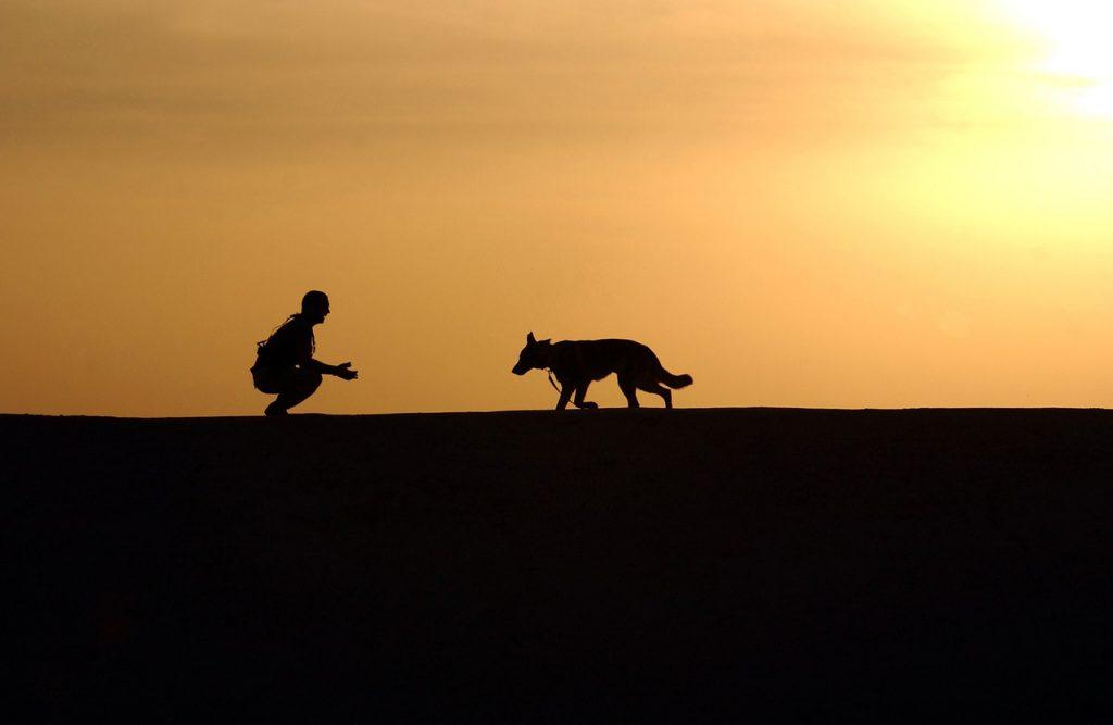 Wunschvorstellung Leben mit Hund