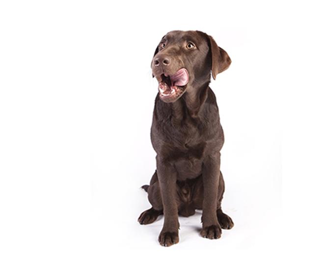 Appetitlosigkeit bei Hunden
