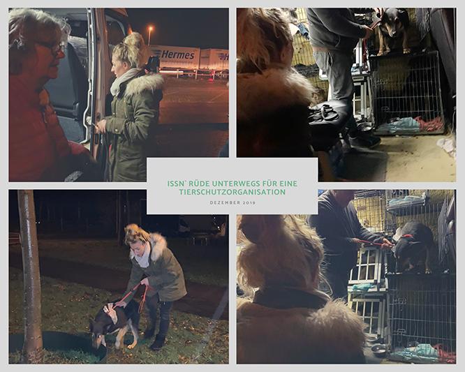 Issn` Rüde unterwegs für eine Tierschutzorganisation