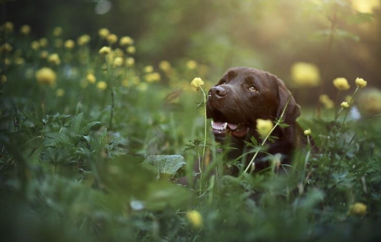 Ätherische Öle für Hunde
