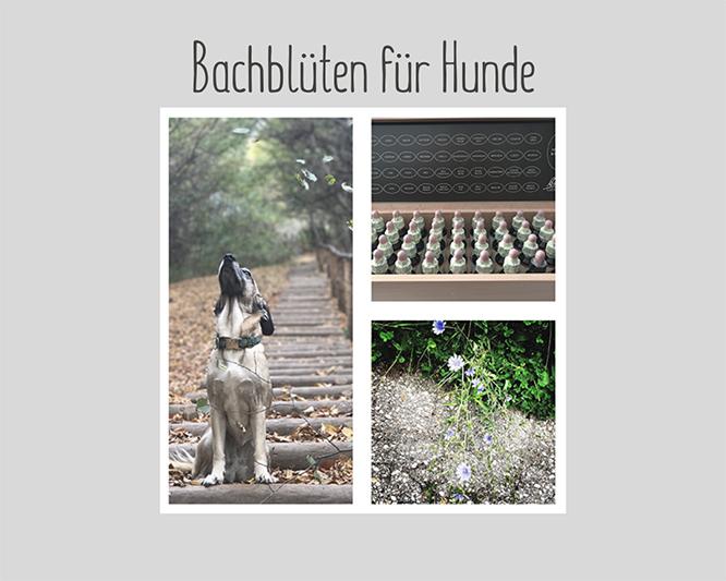 Bachblüten für Hunde