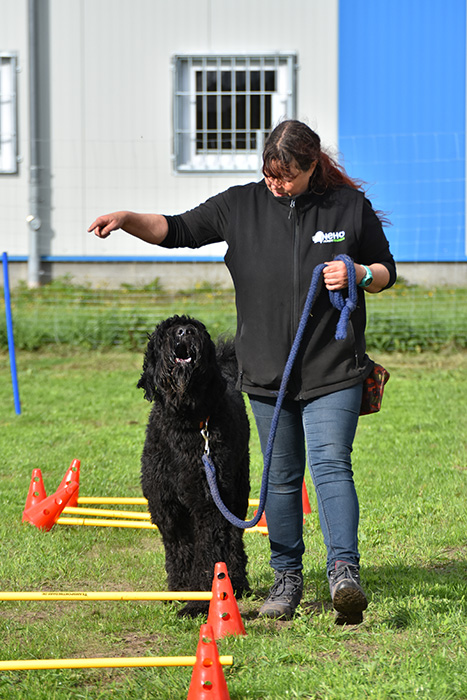 NeHo-Hundetraining