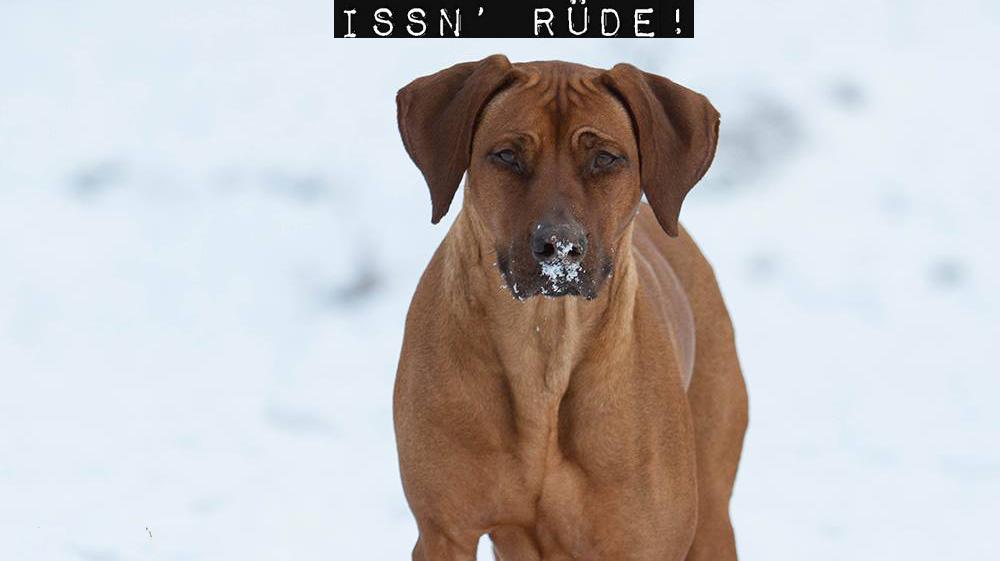 Issn' Rüde! – Hunde News & Dogstyle